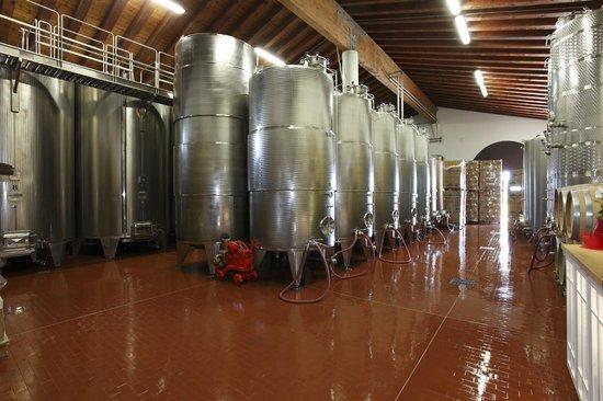 Cantina Molon Luigino - Perkebunan anggur dan wine