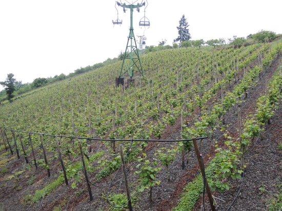 Sesselbahn in Boppard: ブドウ畑の上を登ります