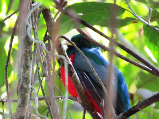 Forest Guided Tours: Candid camera - a very special bird!