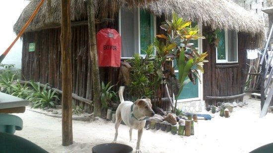 My Tulum Cabanas: cabañas