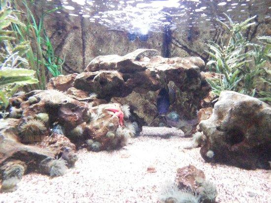 Aquarium Sea Life Paris Val D'Europe : dive in
