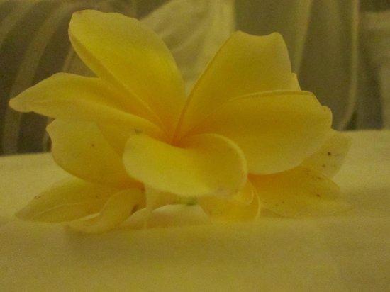 Capung Sakti Maison d'Hôtes : fleur de frangipanier pour l'accueil dans les chambres