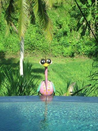 Capung Sakti Maison d'Hôtes : vue sur la piscine d'uns des chambres