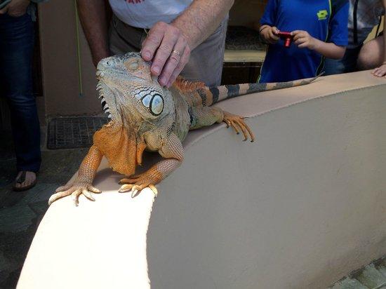 Aquaworld Aquarium & Reptile Rescue Centre: large iguana