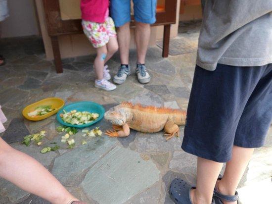 Aquaworld Aquarium & Reptile Rescue Centre : eating fresh veg