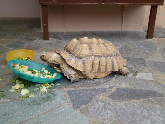 Aquaworld Aquarium & Reptile Rescue Centre: yum