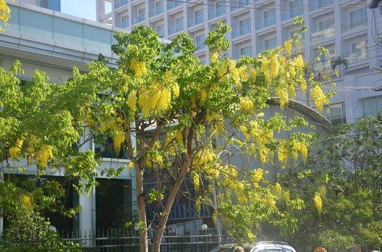 TTC Hotel Premium - Michelia : Возле отеля