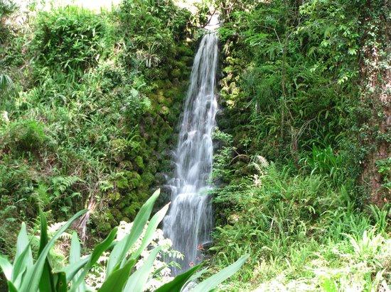 Rainbow Springs State Park: Waterfall