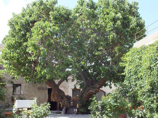 Dervish Cave House : Garden