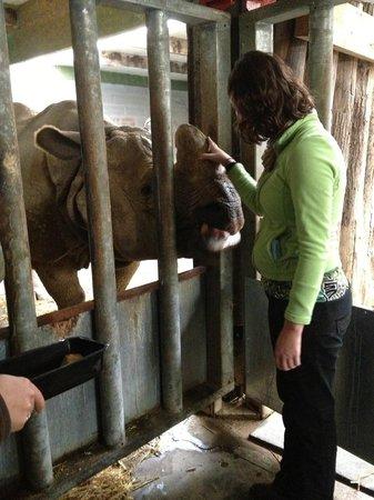 Cerza Safari Lodge : visite du Parc VIP