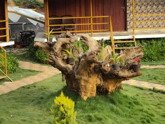 Pepper Green Village: Uprooted tree in front of our cottage