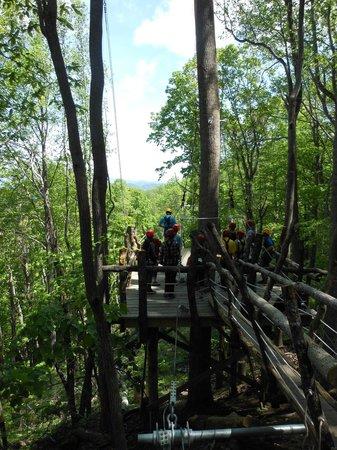 Navitat Canopy Adventures - Asheville Zipline: A platform view