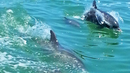 Little Toot Dolphin Adventures: Mom and baby, just beautiful!