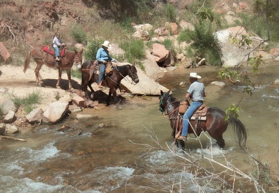 Canyon Trail Rides: Crossing the river at the end of the ride.
