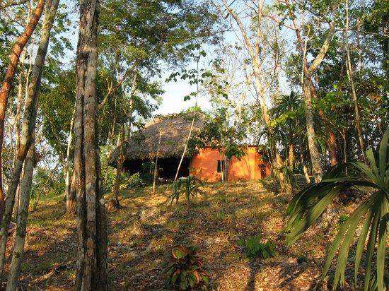 Amber Sunset Jungle Resort : resturant
