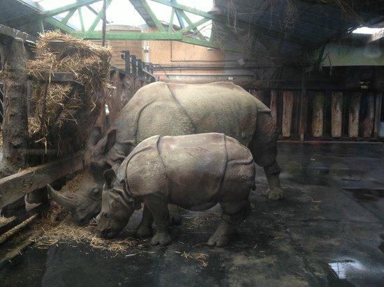 Parc Zoologique Cerza: rhino indien