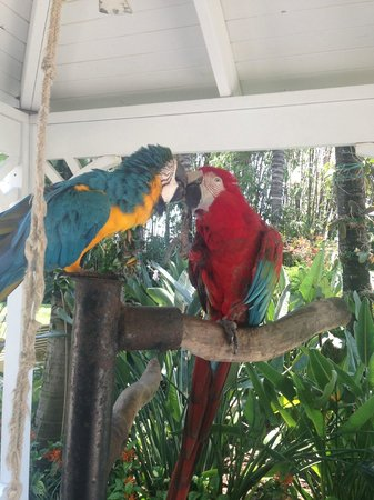 The Palms Hotel & Spa: Bird friends