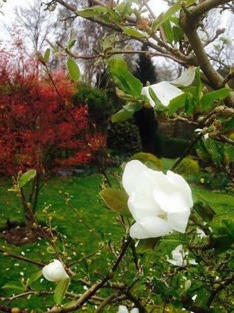 Marion's Bed & Breakfast: springtime