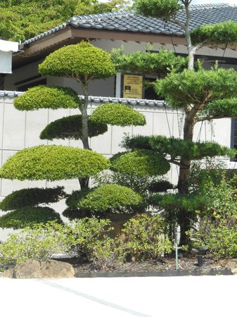 Bonsai Tree Picture Of Morikami Museum Japanese Gardens