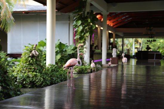 The Reserve at Paradisus Punta Cana: The lobby