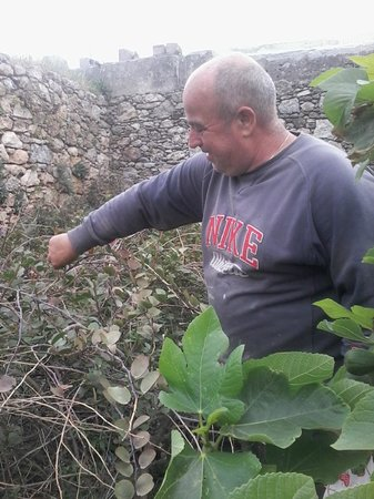 Kalypso Restaurant: picking the capers for our salads