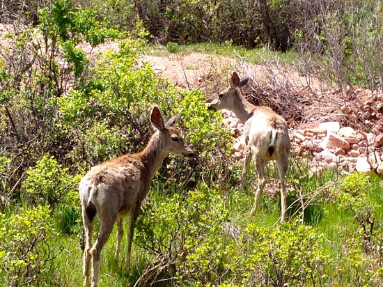 Mesa Trail: Sometimes you will see deer on the trail