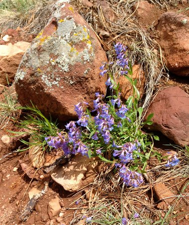 Mesa Trail : spring flowers