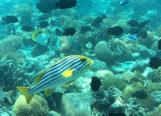 Anantara Kihavah Maldives Villas: SEA underwater restaurant