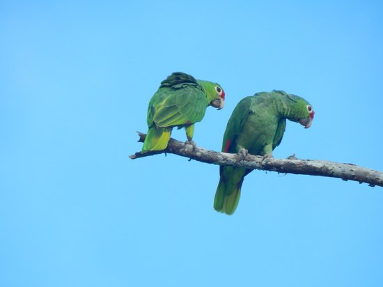 El Remanso Lodge : A pair of parrots--love at our first sight!