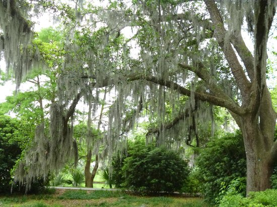 Country Inn & Suites By Carlson, New Orleans French Quarter: Botanic Gardens en City Park