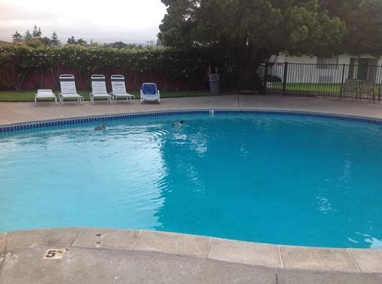 Coral Reef Inn & Suites: A lagoon is beyond the hedge, but ducks came here to swim.