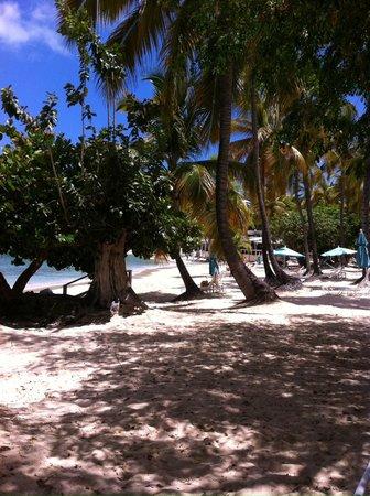 Secret Harbour Beach Resort : The Beach