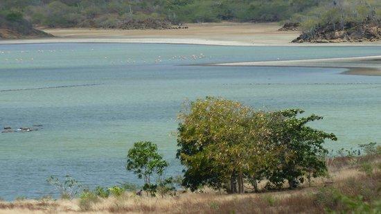 Flamingo Sanctuary : Flamingos on the lake