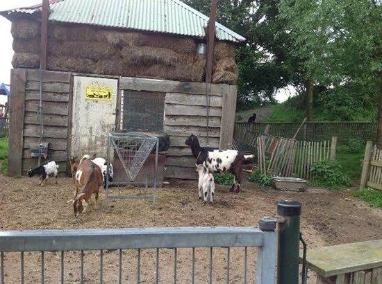 Camping Zeeburg: Goat Pen