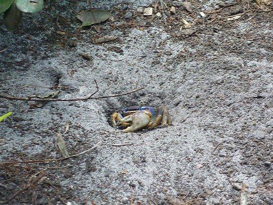 Secret Woods Nature Center: crab