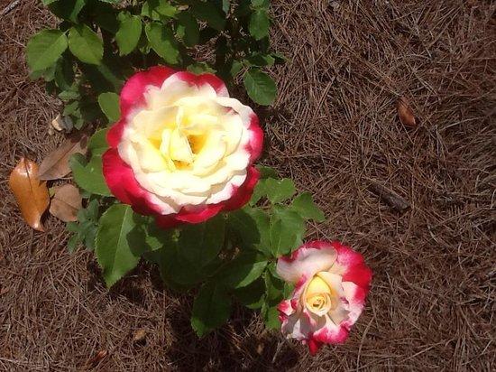 Bellingrath Gardens and Home: Rose Garden