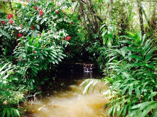 Hostal el Rocio: Lagoon