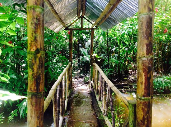 Hostal el Rocio: Bamboo Bridge