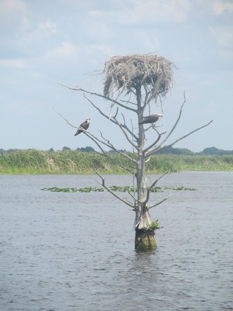 Florida Cracker Airboat Rides & Guide Service: Birds