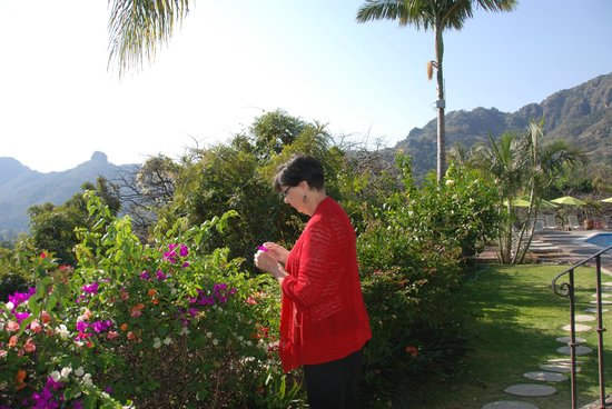 Posada Del Tepozteco : gardens