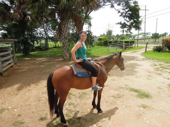 Hanna Stables: Horsey One