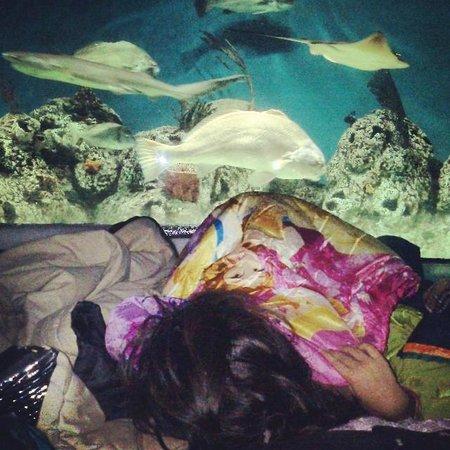 Temaikèn Bioparque: al pie del acuario