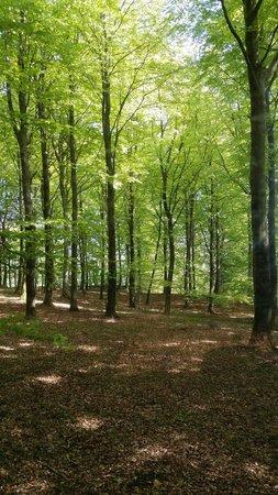 Haslev, Dinamarca: Bøgeskov