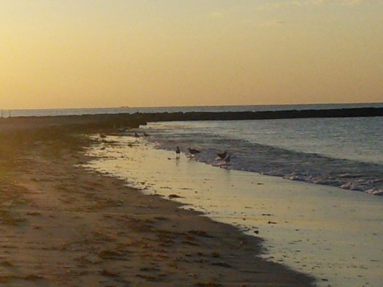Holly Tree Resort: Seagull beach sunrise