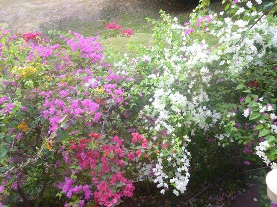 Bell Park View Guest House : Garden