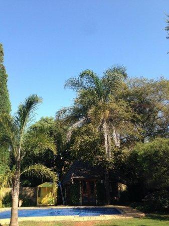 Greenlea Guest House: Palmen und einer der beiden Pools