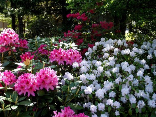 Whitley House B&B: Gardens and Grounds