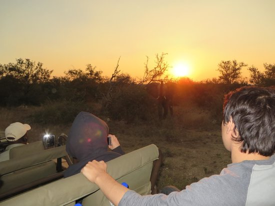 Naledi Game Lodges: African Sunset with Ele