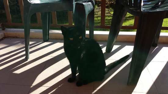 Albir Garden Resort: our adopted cat for the week