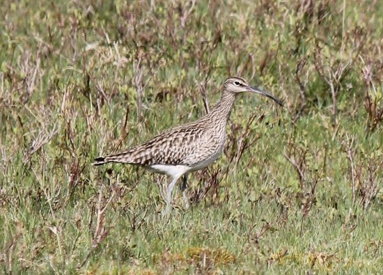 Brockville Bed and Breakfast: Whimbrel by Loch Spelve